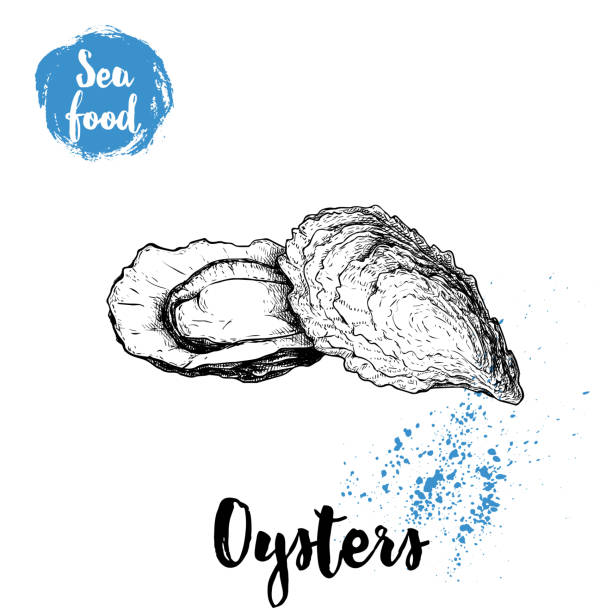 Hand drawn oysters composition. Seafood sketch style illustration. Fresh marine mollusks in closed and opened shells. vector art illustration