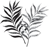 Vector illustration of an elegant hand drawn palm leaf. Floral design element.