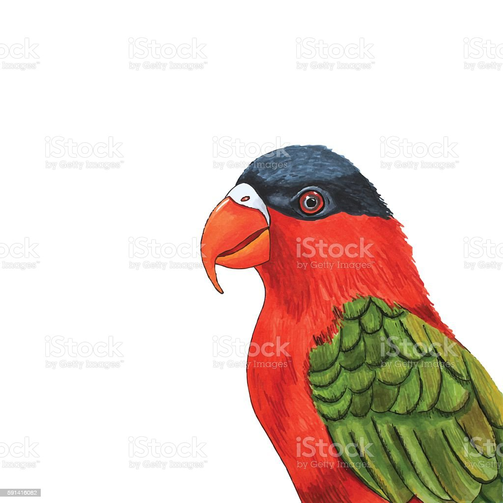 Hand drawn parrot head. Exotic bird isolated on white background. vector art illustration