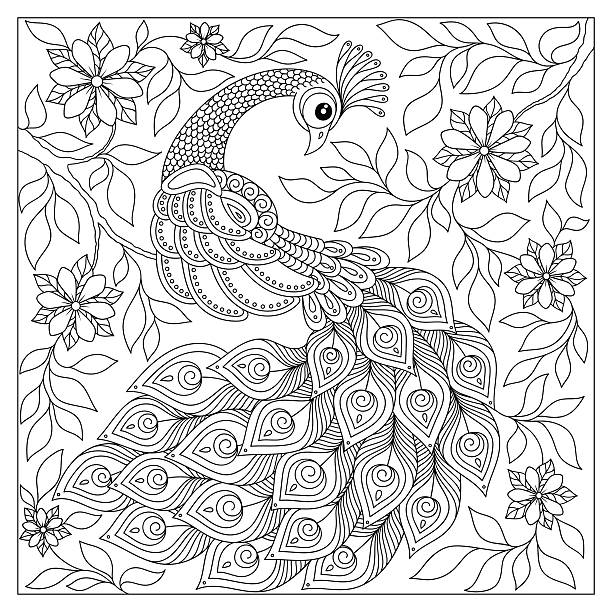 Hand drawn Peacock for anti stress Coloring Page vector art illustration