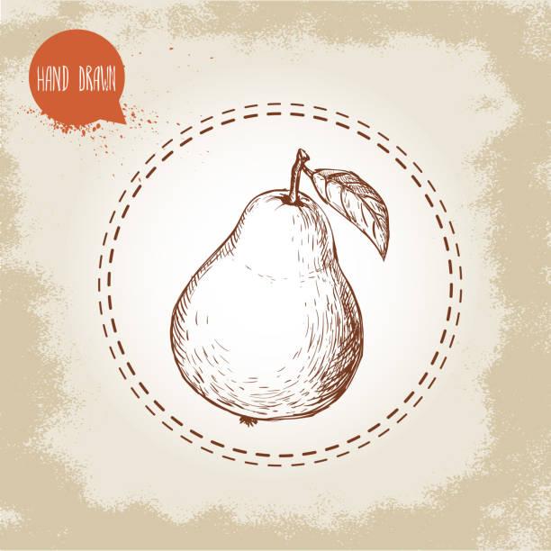 Handgezeichnet Birne. Retro-Skizze Stil Bio-Obst-illustration – Vektorgrafik