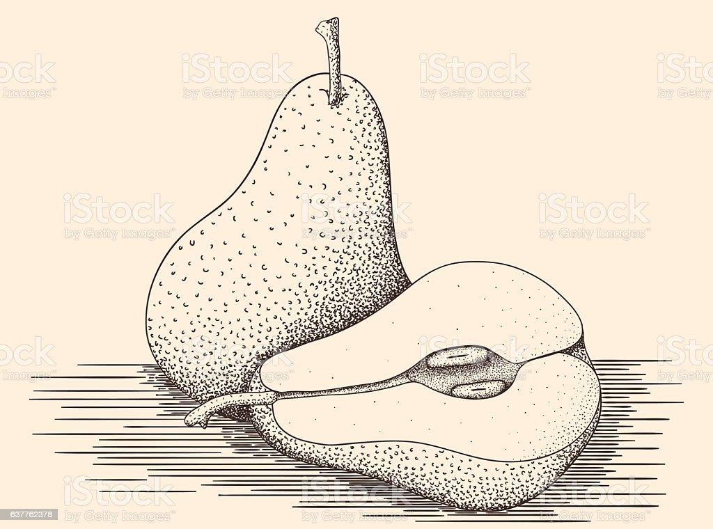 Hand drawn pears vector art illustration