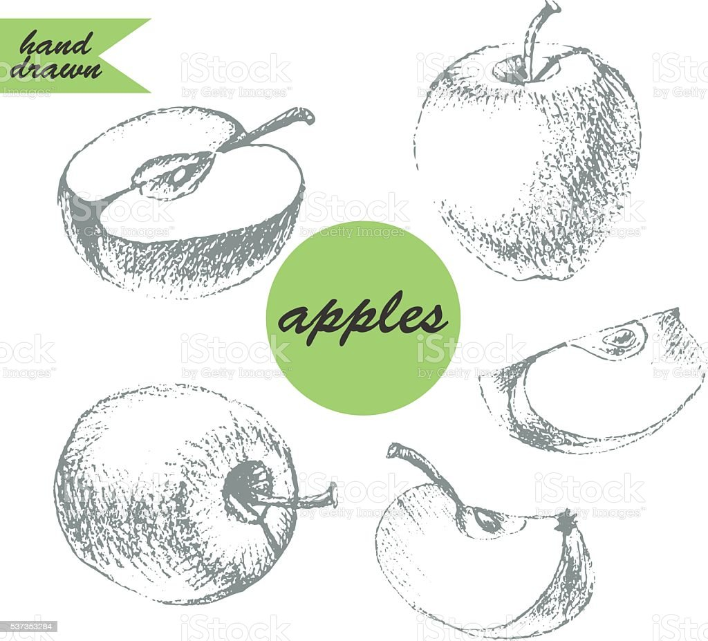 Hand drawn pencil sketch of apple fruit stock vector art more