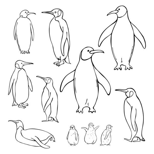 Hand drawn penguins. Vector sketch  illustration. Hand drawn penguins on white background. Vector sketch  illustration. image stock illustrations