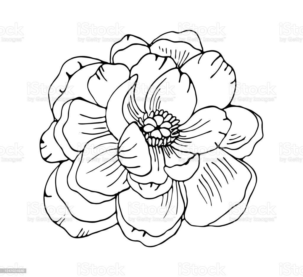 Flower Outline PNG, SVG Clip art for Web - Download Clip