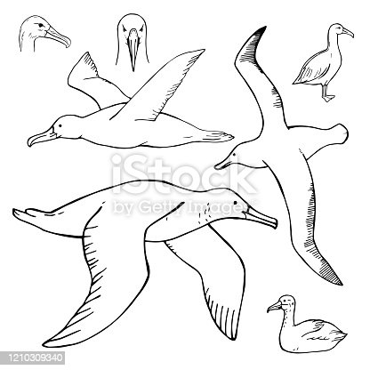 istock Hand drawn petrel. Vector  illustration 1210309340