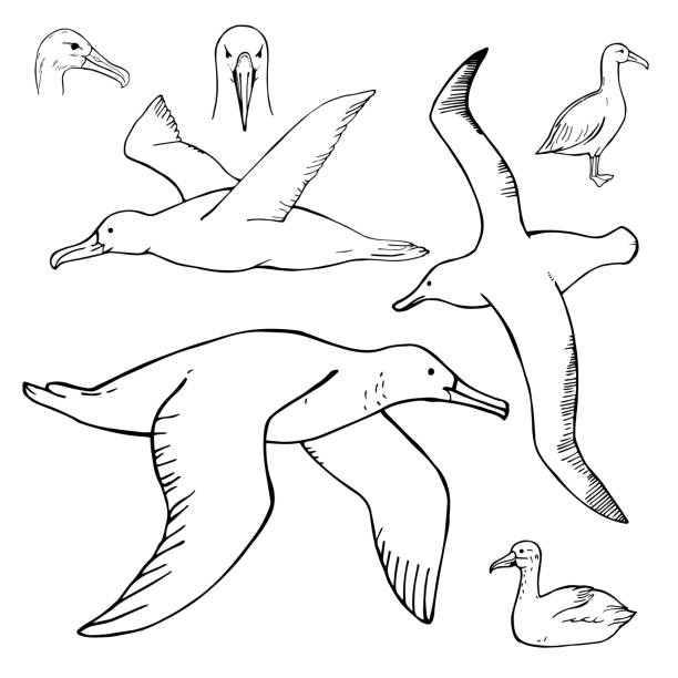 stockillustraties, clipart, cartoons en iconen met hand getrokken stormvogel. vectorillustratie - ornithologie