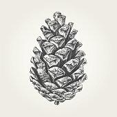 Vintage vector illustration of nature object