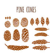 Hand Drawn Pine Cones Vector Collection Set. Design Element for Autumn, Winter, Thanksgiving or Christmas Card Concept.