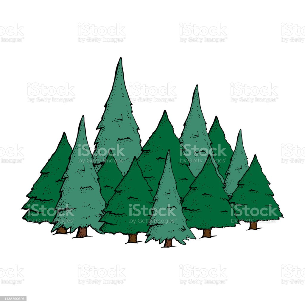 Hand Drawn Pine Forest Cartoon Spruce Trees Isolated On A White Background Trees Pine Fir Spruce Christmas Tree Outdoor And Hiking Vector Illustration Stock Illustration Download Image Now Istock Download high quality pine tree cartoons from our collection of 41,940,205 cartoons. hand drawn pine forest cartoon spruce trees isolated on a white background trees pine fir spruce christmas tree outdoor and hiking vector illustration stock illustration download image now istock