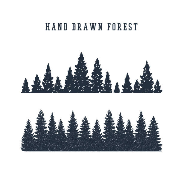 Hand drawn pine forest vector illustration. Hand drawn pine forest textured vector illustration. pine tree stock illustrations