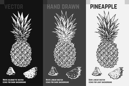 Hand drawn pineapple icons set isolated on white, gray and black chalk background. Sketch of fruits for packaging and menu design. Vintage vector illustration.