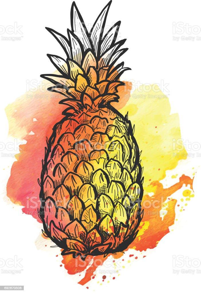 Hand Drawn Pineapple On Watercolor Blob Stock Vector Art ...