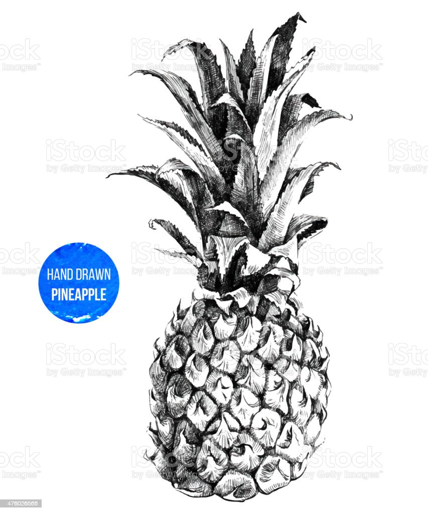 hand drawn pineapple stock vector art amp more images of