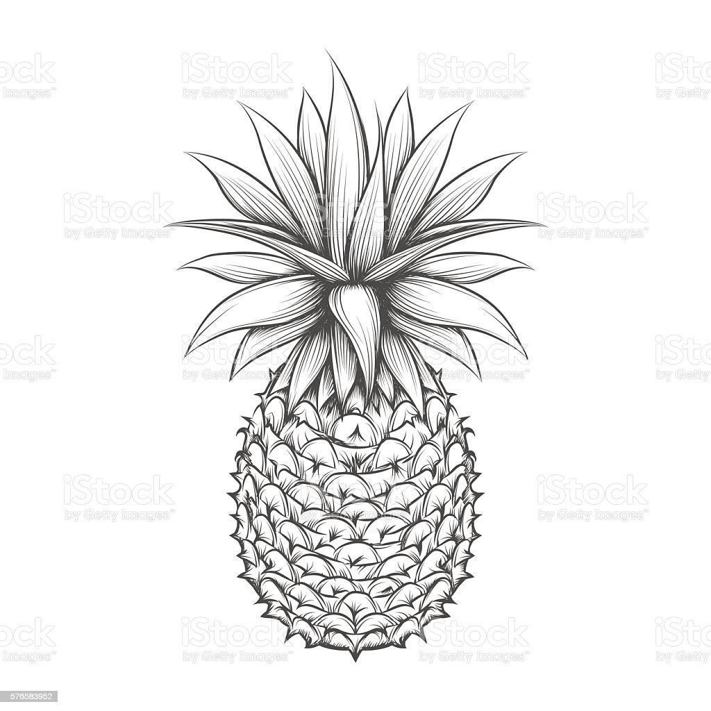 Ananas Rysunek ręcznie rysowane ananasa - stockowe grafiki wektorowe i
