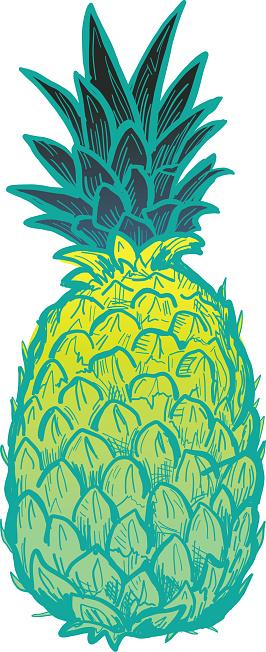 Hand drawn pineapple