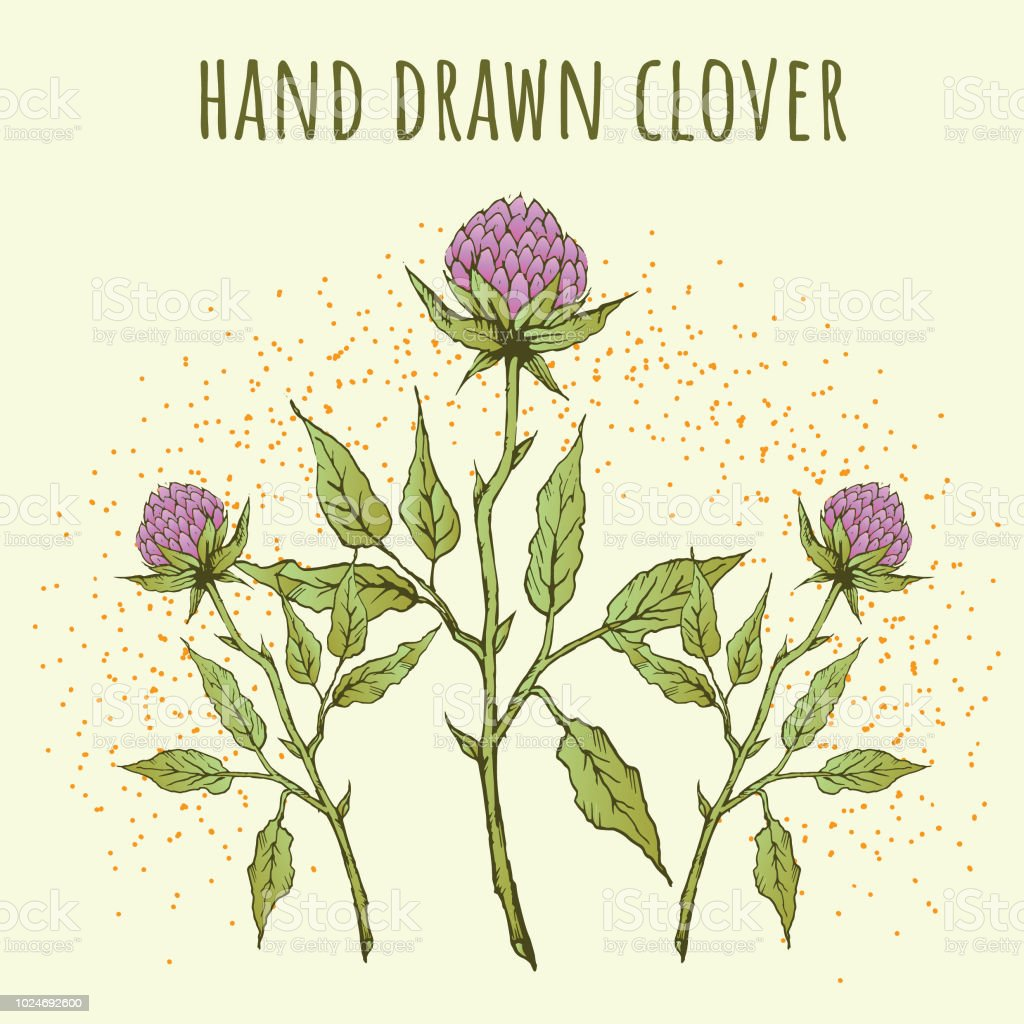 Hand Drawn Pink Clover Flowers On Light Background Stock Vector Art