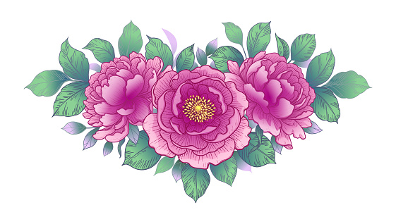 Hand drawn pink peony flowers and leaves bunch