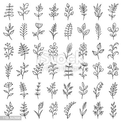 Set of hand drawn plants. Doodle design elements.