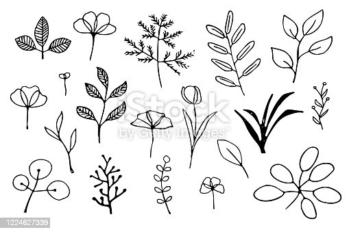 Set of simple hand drawn leaves, herbs and flowers outlines
