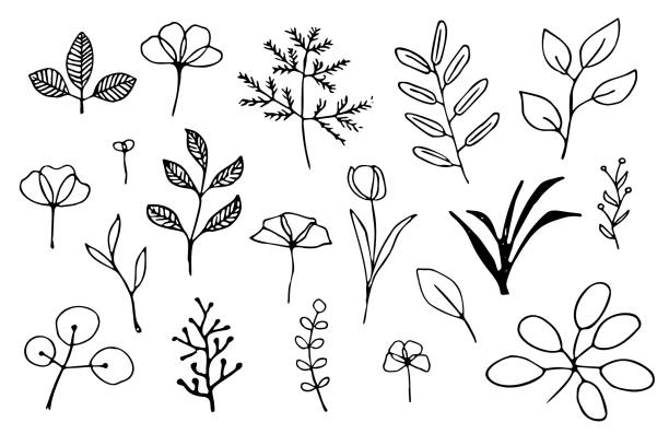 Hand drawn plants Set of simple hand drawn leaves, herbs and flowers outlines autumn drawings stock illustrations