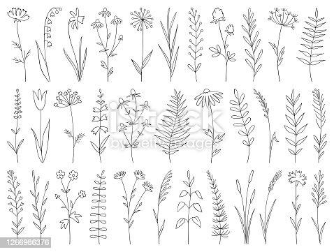 istock Hand drawn plants 1266986376