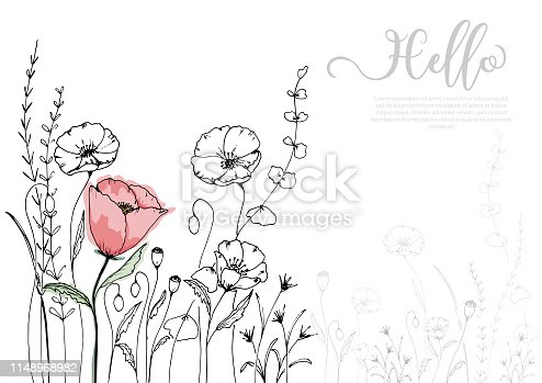 Hand drawn poppy blossom with black line and watercolor style. isolated vector use for design, greeting card, nature banner, Floral background. - Vector