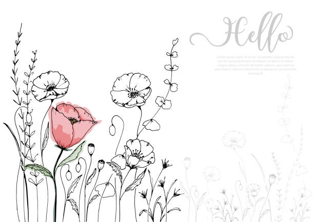 Hand drawn poppy blossom with black line Hand drawn poppy blossom with black line and watercolor style. isolated vector use for design, greeting card, nature banner, Floral background. - Vector flowers stock illustrations