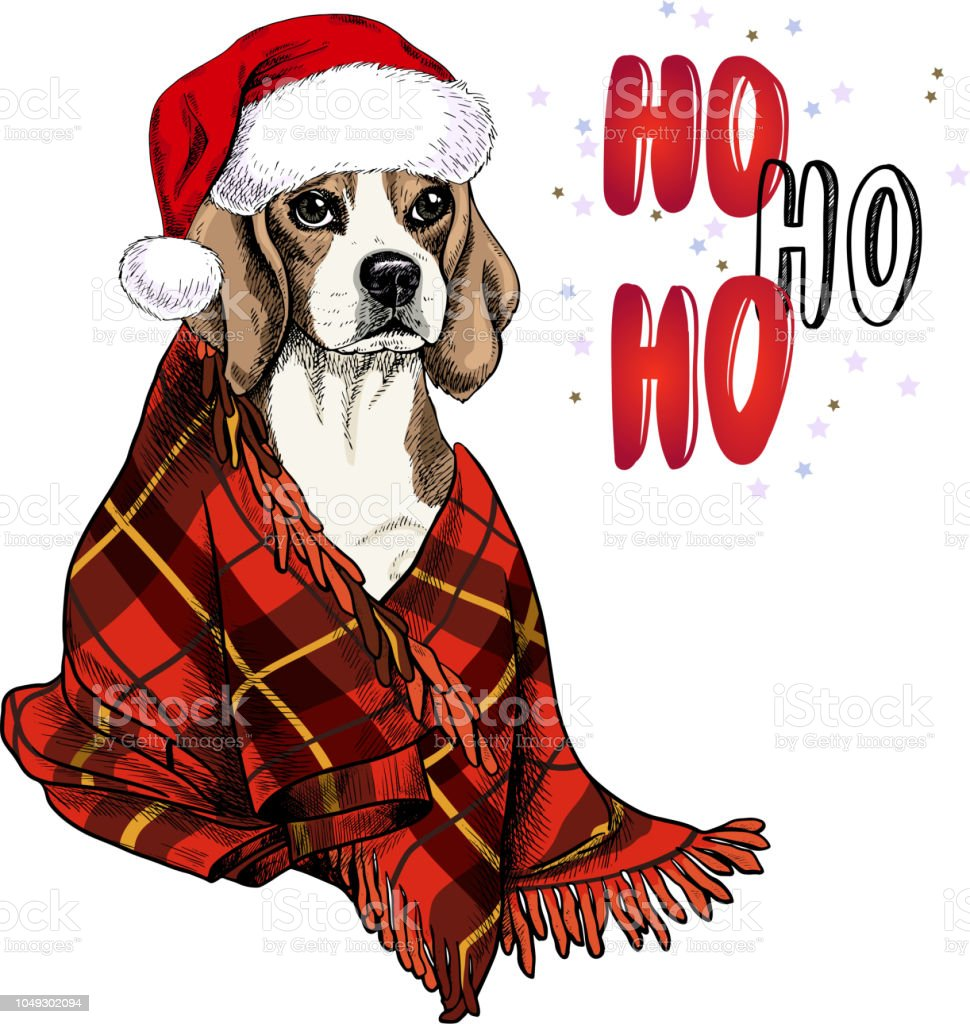 ad8695d5d47 Hand drawn portrait of beagle dog wearing santa hat and plaid blanket.  Vector Christmas poster