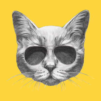 Hand drawn portrait of Cat with sunglasses.