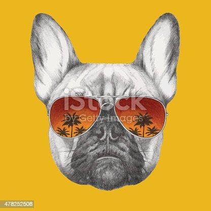 Hand drawn portrait of French Bulldog with mirror sunglasses.