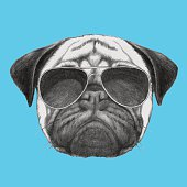 Hand drawn portrait of Pug Dog with sunglasses.