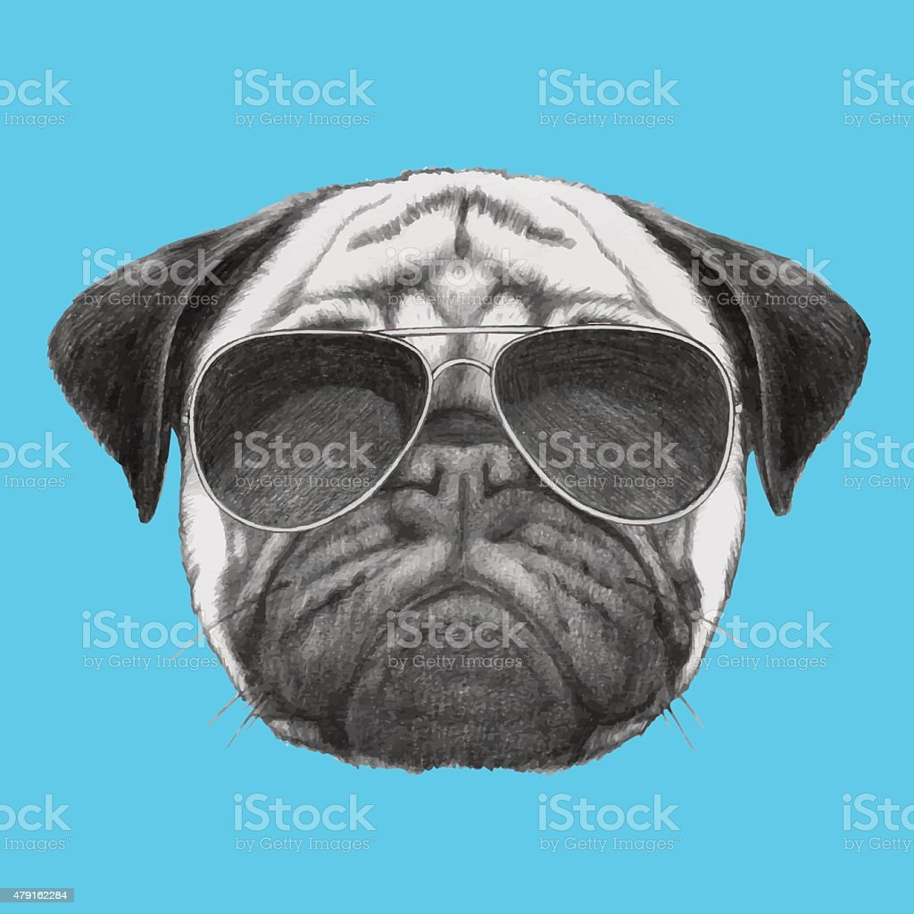 Hand drawn portrait of Pug Dog with sunglasses. vector art illustration