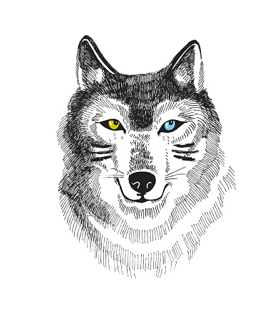 Hand drawn print with wolf or husky. Boho vector design for t-shirt. Stylish  card with dog isolated on the white background.