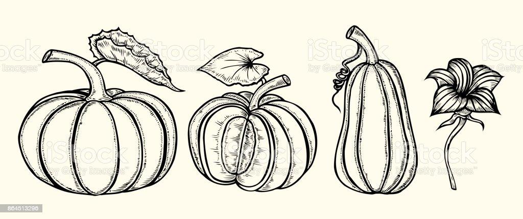 Hand drawn pumpkin vector art illustration