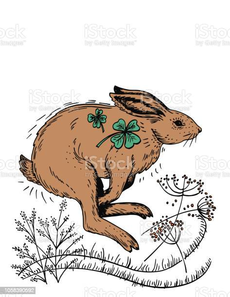 Hand drawn rabbit and plants vector id1058390592?b=1&k=6&m=1058390592&s=612x612&h=everu4cchqcci x6ml7oem9sdt5ast5mix0cetex9ly=