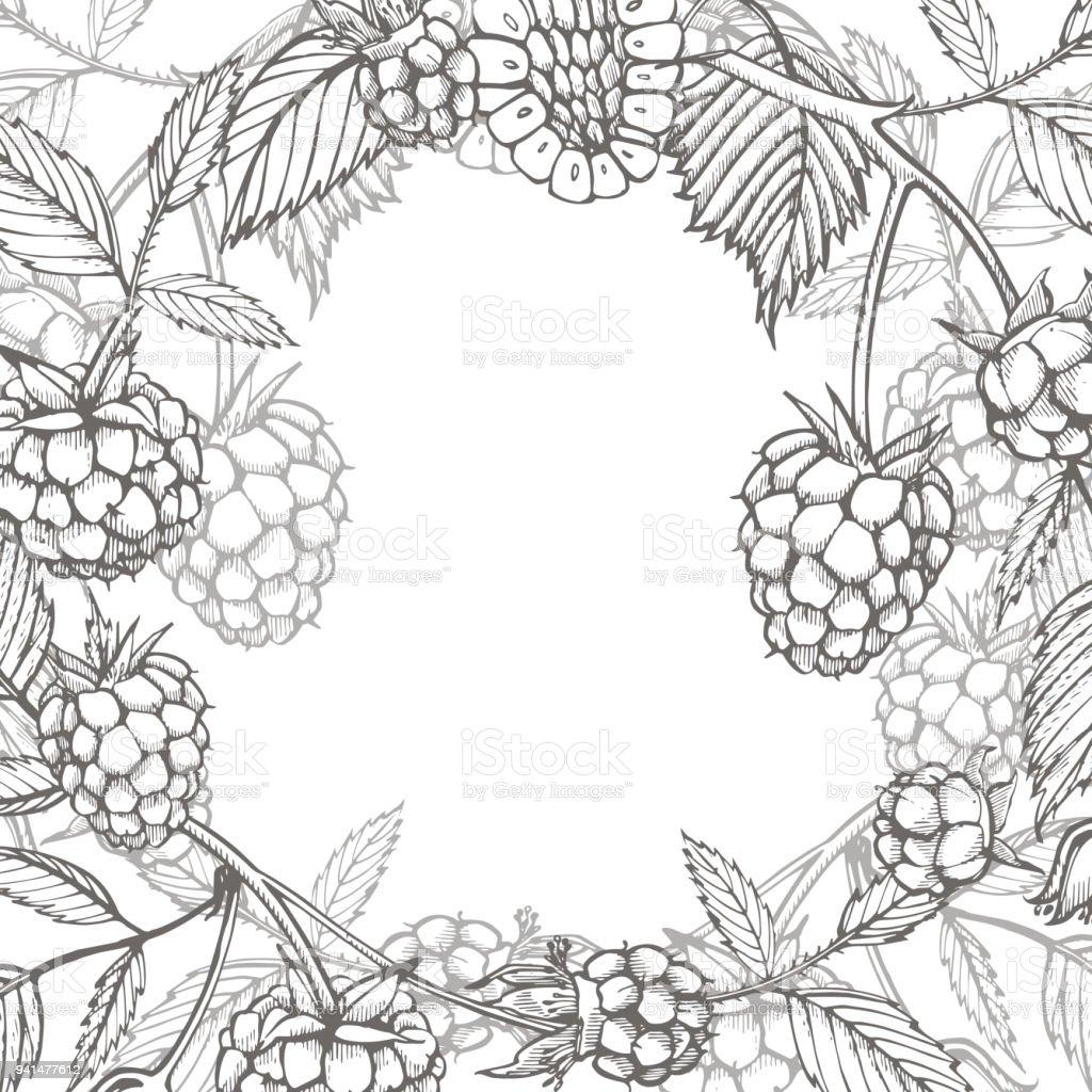 Hand Drawn Raspberry Retro Sketch Style Vector Illustration Perfect