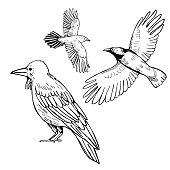 istock Hand drawn raven . Vector  illustration. 1197707094