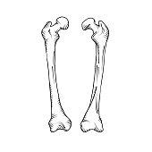 Arm Bones Drawing at GetDrawings com | Free for personal use