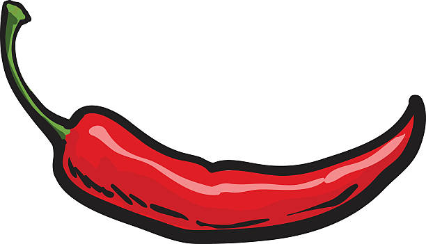 Hand drawn red hot chili pepper isolated on white background vector art illustration