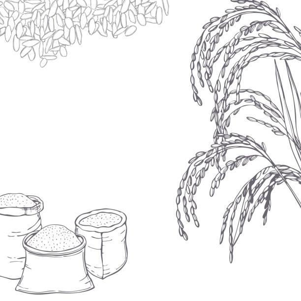 손으로 그린 쌀. 벡터 배경입니다. - 잘 익은 stock illustrations