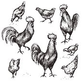 Hand drawn roosters and hens