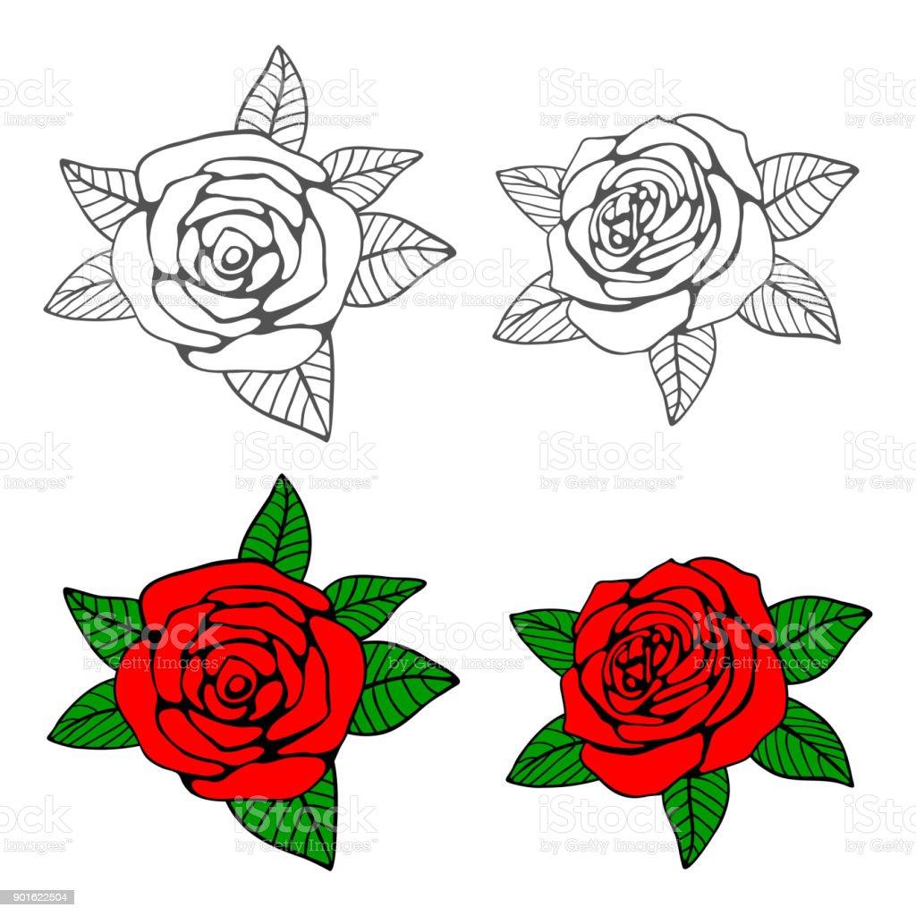 Handgezeichnete Rosen Malvorlagen Stock Vektor Art und mehr Bilder