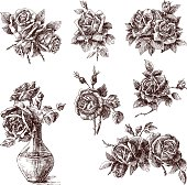 The vector drawings of a different roses.