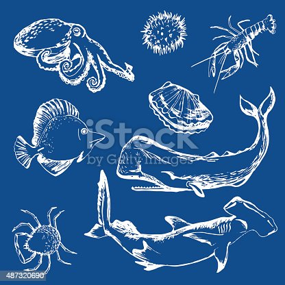Hand drawn sea fishes: shellfish, lobster, sperm whale, shark, porcupine fish, crab, octopus