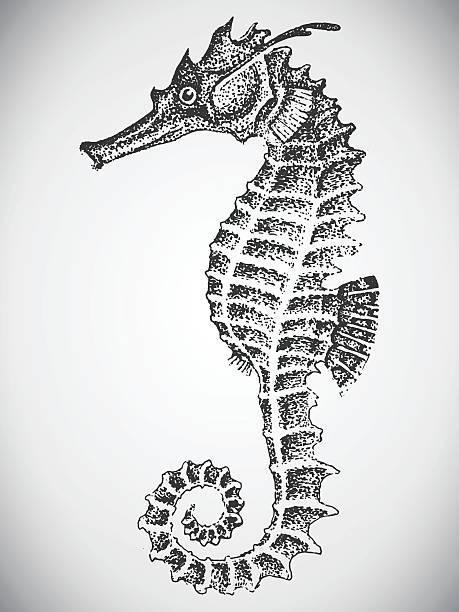 Hand drawn sea horse Natural hand-drawn illustration of a sea horse, engraving, tattoos sea horse stock illustrations