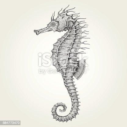 istock Hand drawn seahorse 584773470