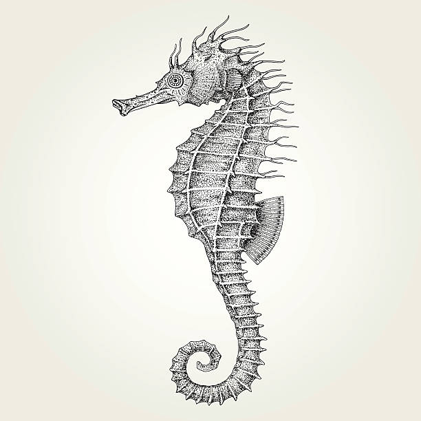 Hand drawn seahorse vector art illustration