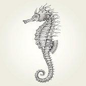 Hand drawn seahorse