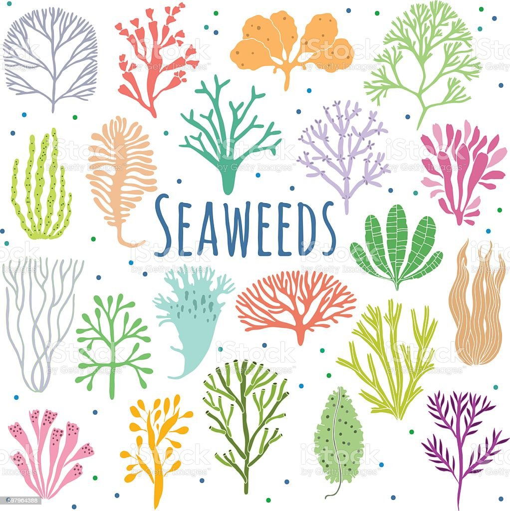 Hand drawn seaweed, coral set isolated. Sea plant icons - ilustración de arte vectorial